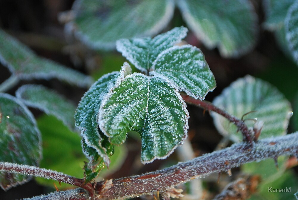 Frosted Bramble by KarenM