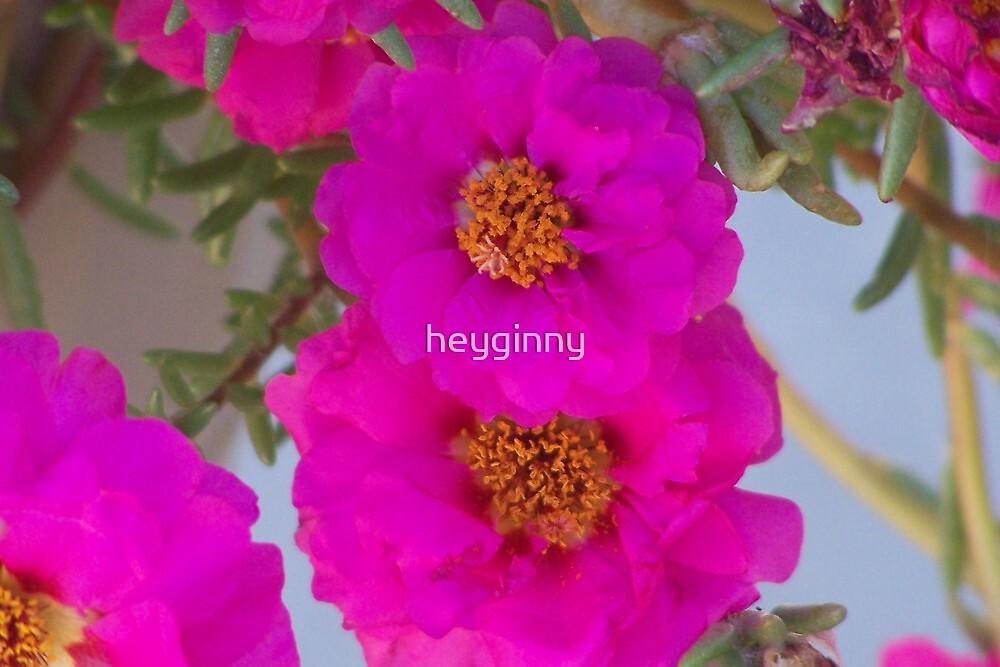 Pink Succulent by heyginny