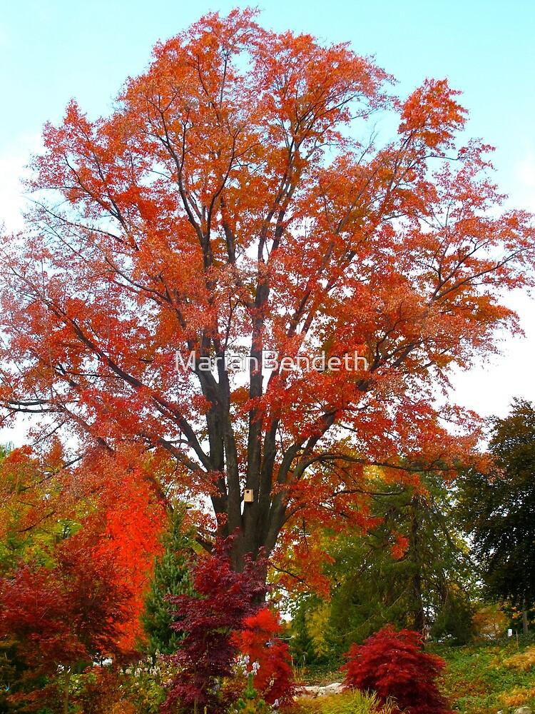 Roaring-Fire Tree by MarianBendeth