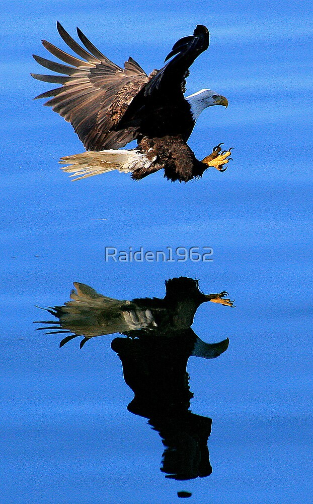 Reflections by Raiden1962