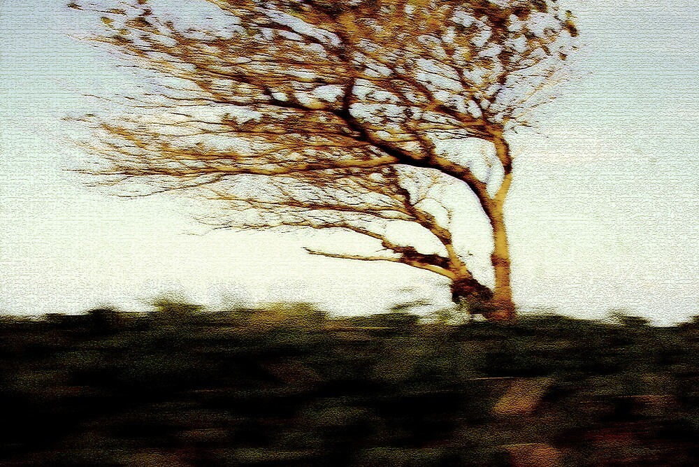 Tree in Passing by PretaPortie