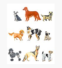 Favorite Dog Breeds Photographic Print