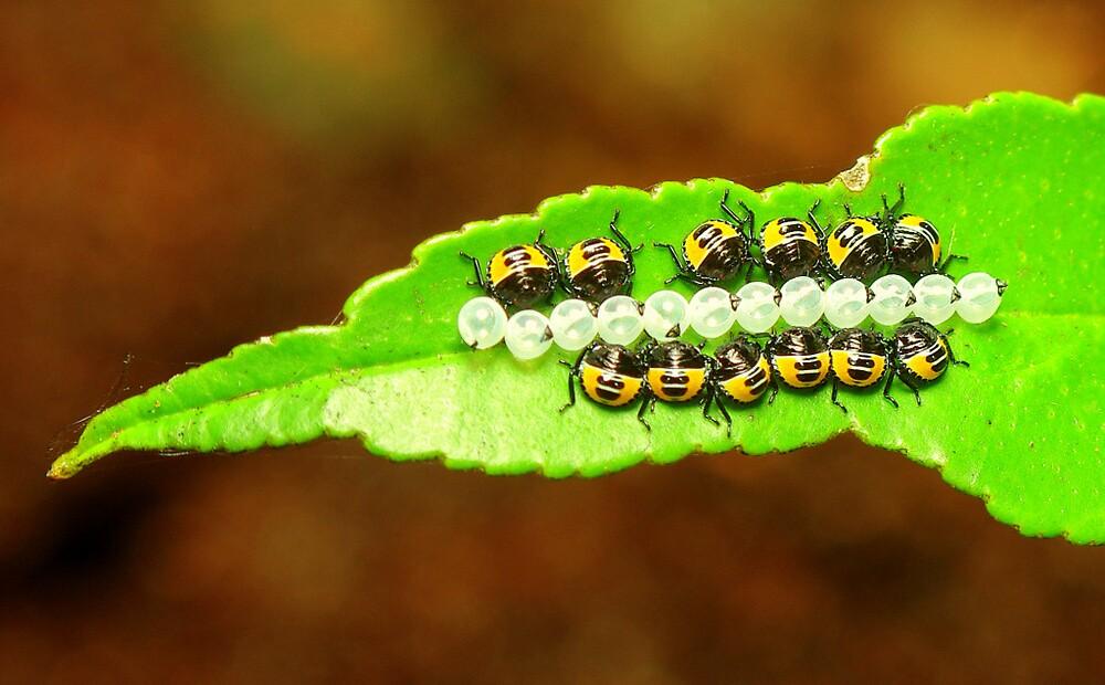 bugs by Grunto