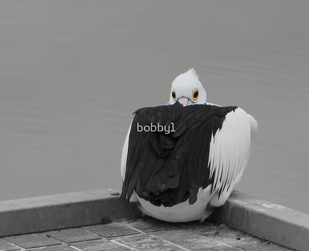 No beak by bobby1