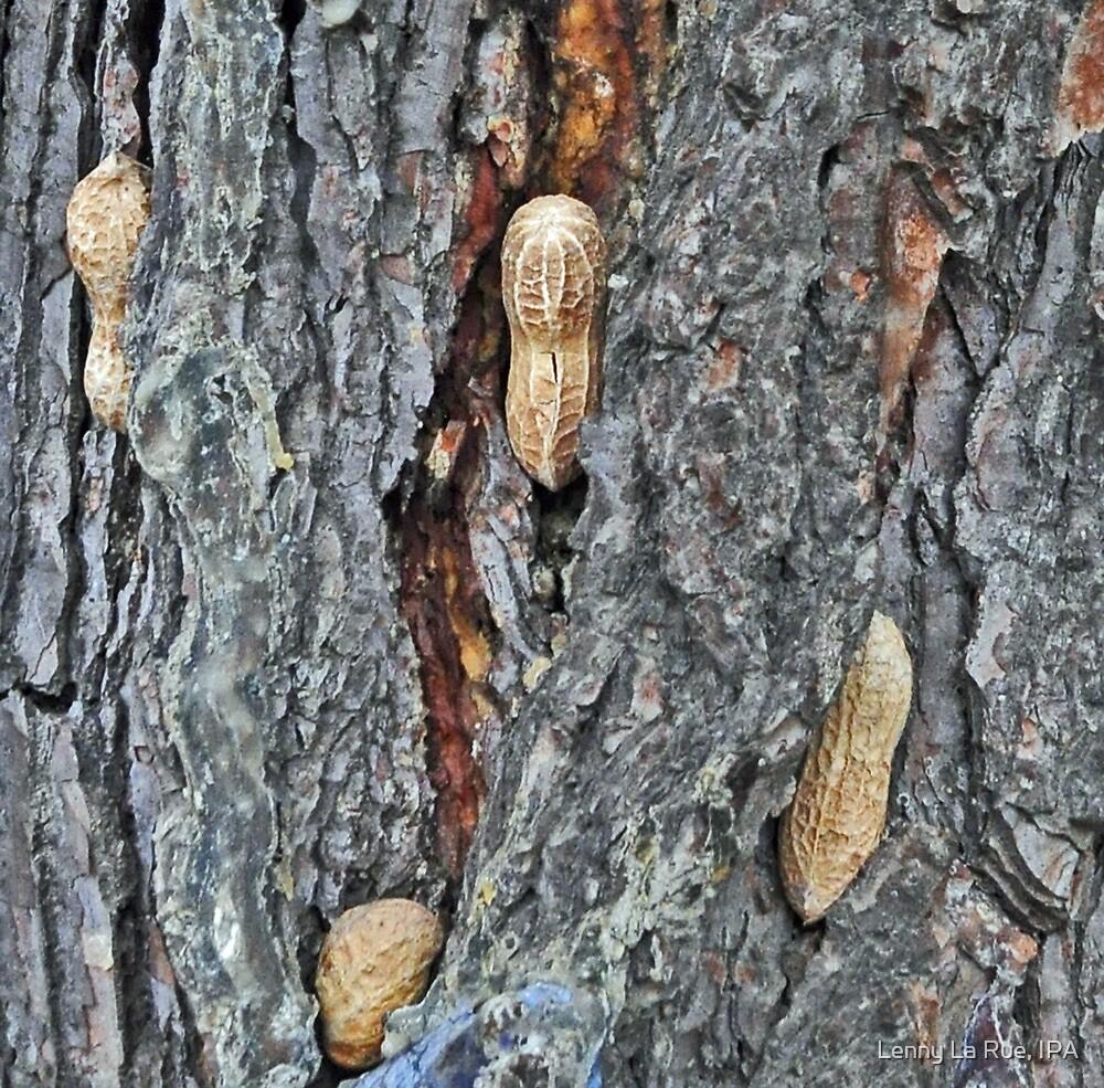 The Rare Nutree by Lenny La Rue, IPA