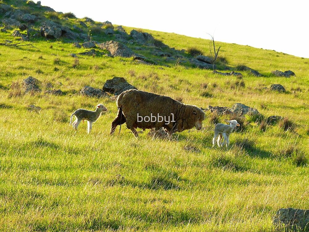 New born lambs by bobby1