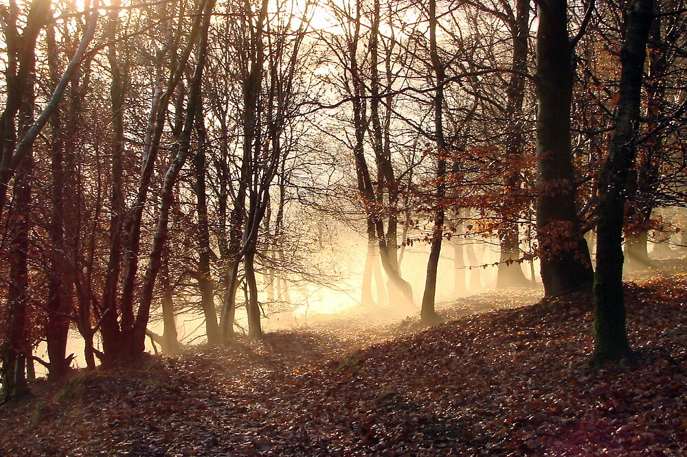 Winter Morning, Frost Rising by Joanna Paterson
