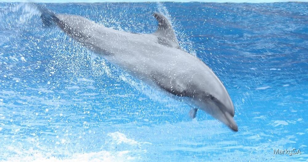 Dolphin jumps for joy by MarkySA