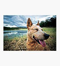 ...a dog's life... Photographic Print