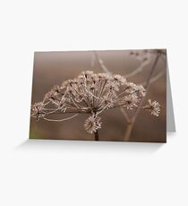 Frozen stars  Greeting Card