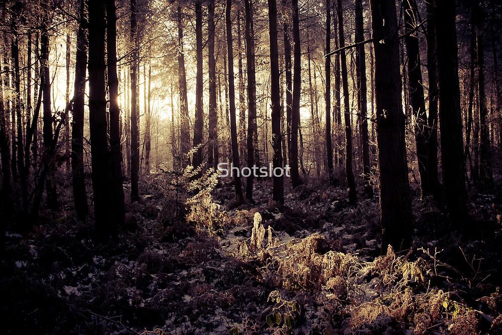 Forest Slice by Shotslot