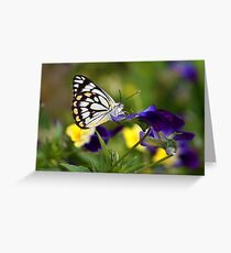 Pansy Butterfly Greeting Card
