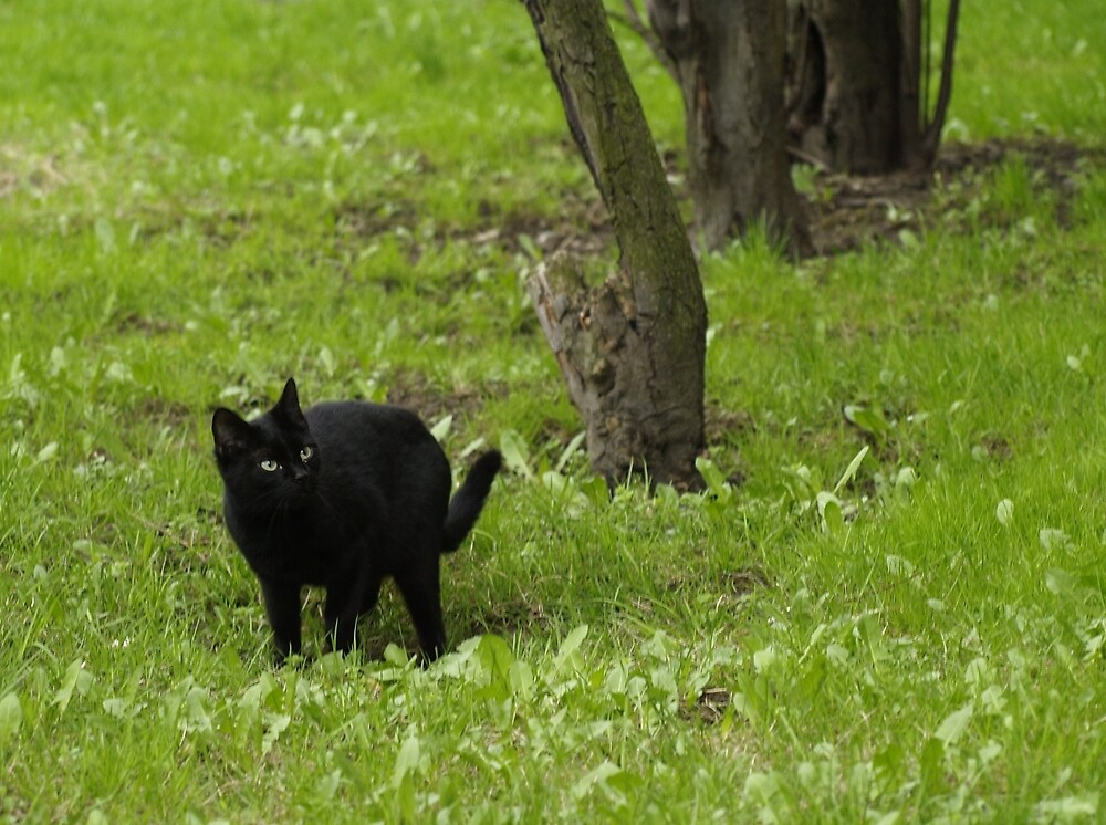 Kitty on a green grass by AniaScorpy