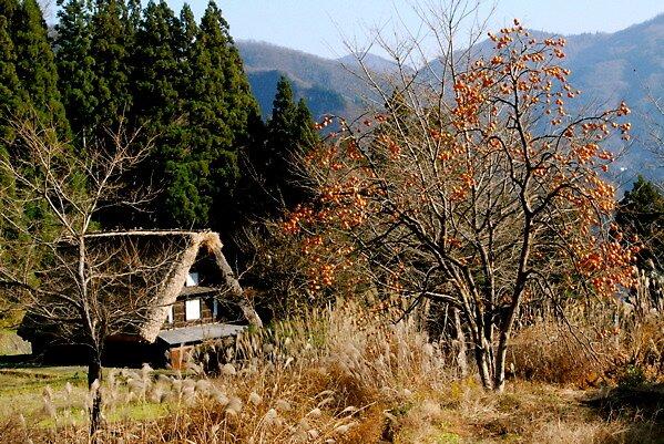 Landscape with a persimmon (2) ,AINOKURA by yoshiaki nagashima