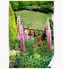 Pink Lupin flowers in a garden Poster