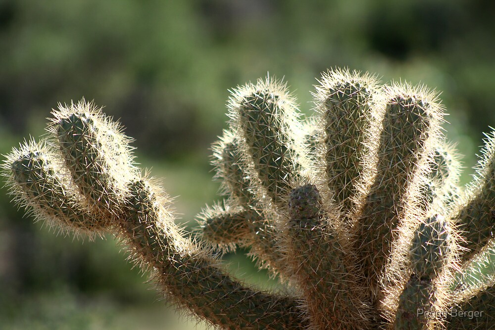 Cholla Cactus by Peggy Berger