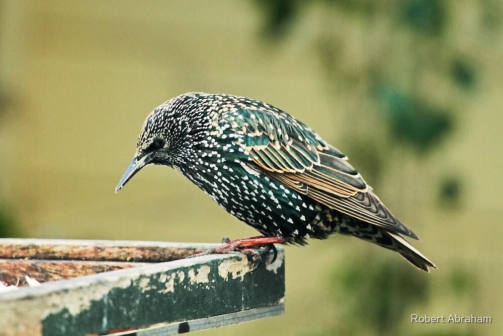 Starling In My Garden by Robert Abraham