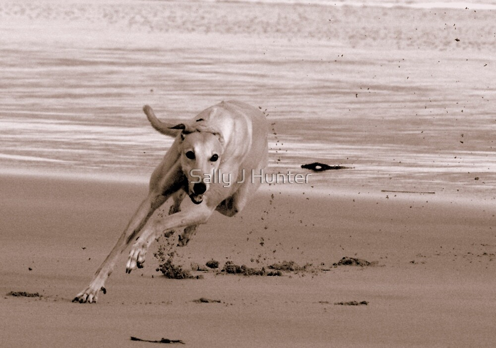 See The Sand Fly by Sally J Hunter