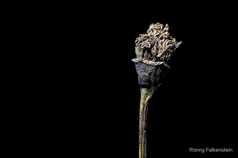 Forgotten Rose - #2 by Ronny Falkenstein