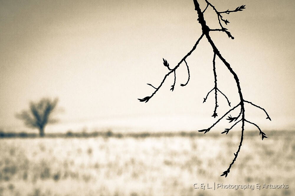 OnePhotoPerDay Series: 349 by L. by C. & L. | Photography & Artworks