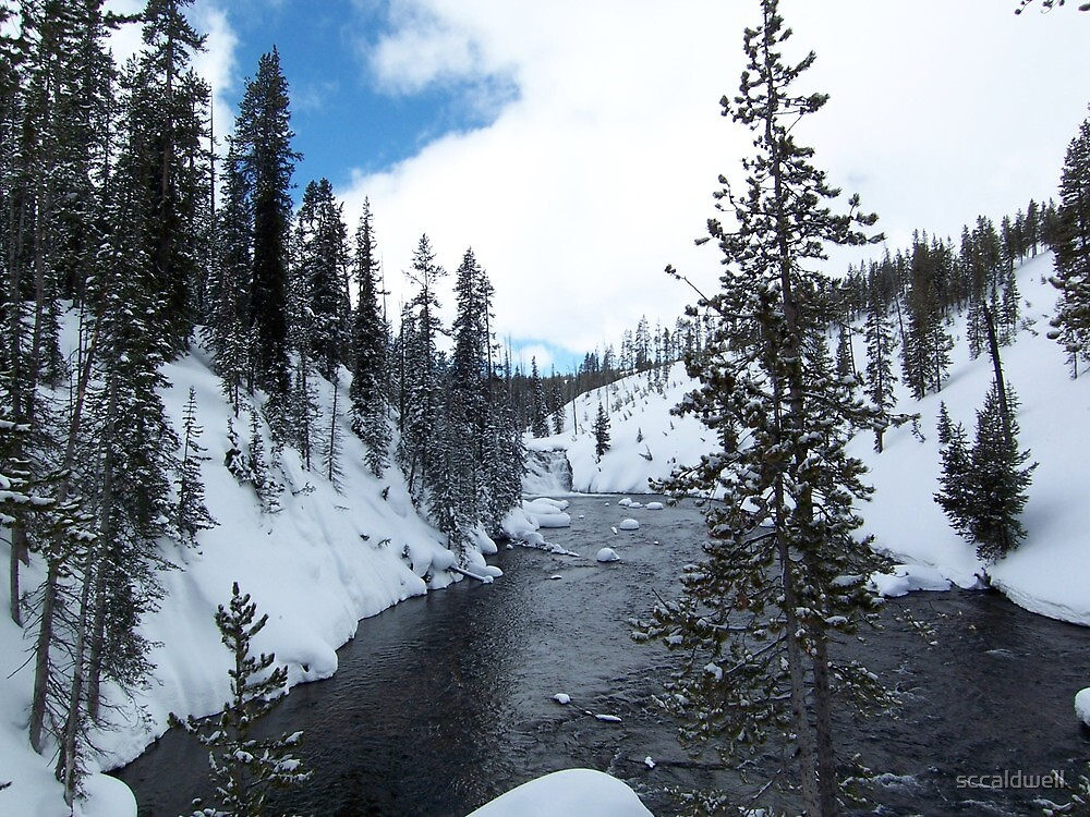 Winter stream in Yellowstone National Park, Wyoming by sccaldwell