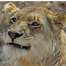Smiling lioness of the ximungwe pride by Anthony Goldman