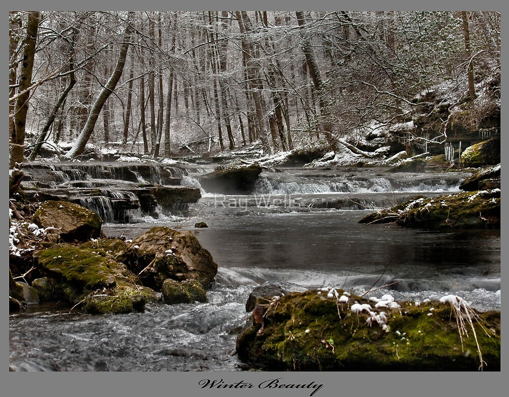 Winter Beauty by Ray Wells