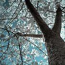 Sakura by Roddy Atkinson