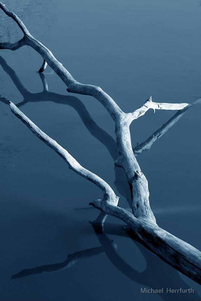FallenTree in Water by Michael  Herrfurth