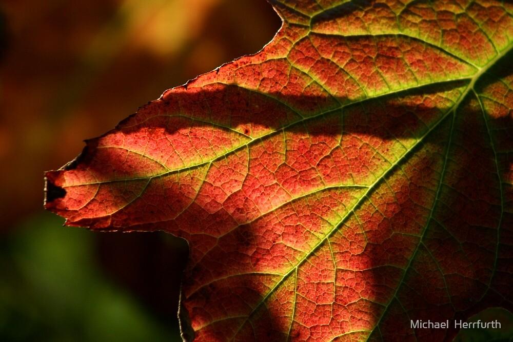 Brilliant Leaf by Michael  Herrfurth