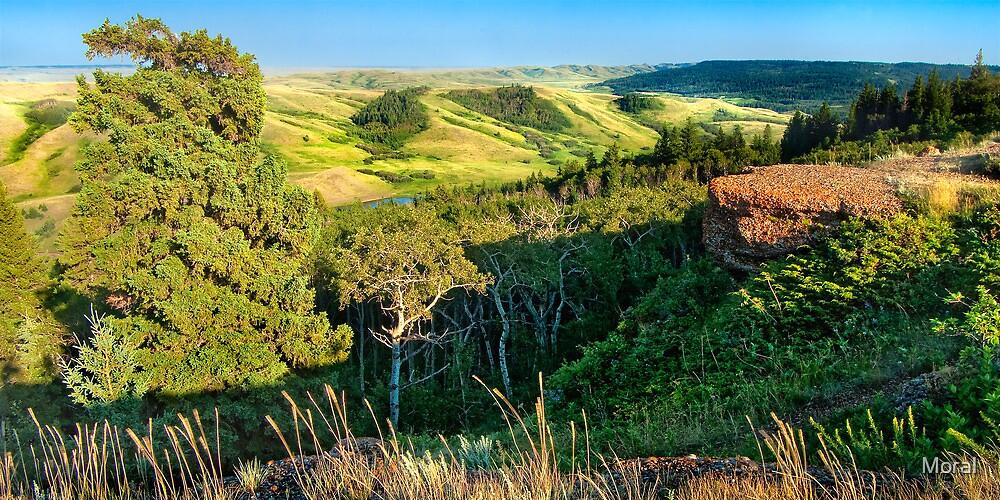 Cypress Hills Interprovincial Park Lookout by Ryan Watts