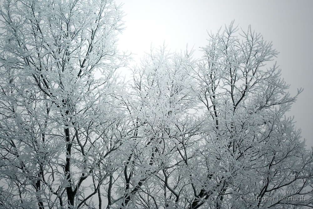Frozen Fog by Christopher Herrfurth
