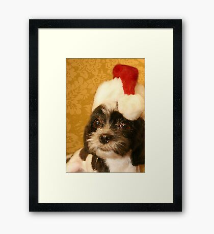 Merry Christmas from one Shih Tzu to another Framed Print