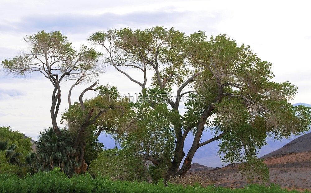 Trees Of Death Valley by Kathleen Struckle