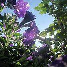 Starry Sky Flowers 7 by Jaeda DeWalt