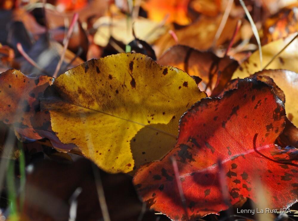 leaves by Lenny La Rue, IPA