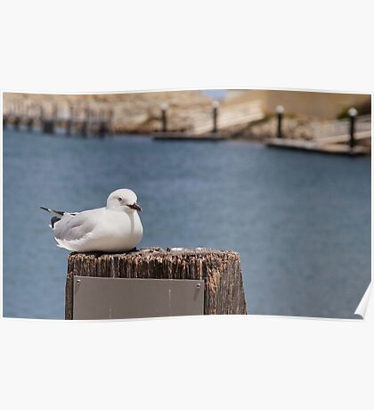 Even a gull has to sit down occasionally Poster