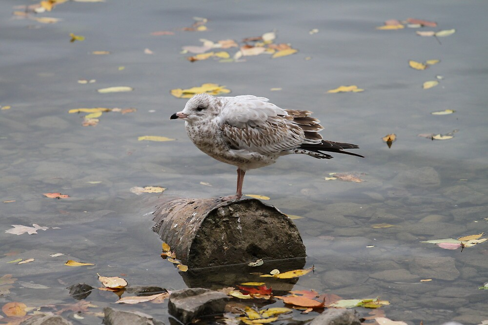 Fall and Soggy Bird Poop by eulogic