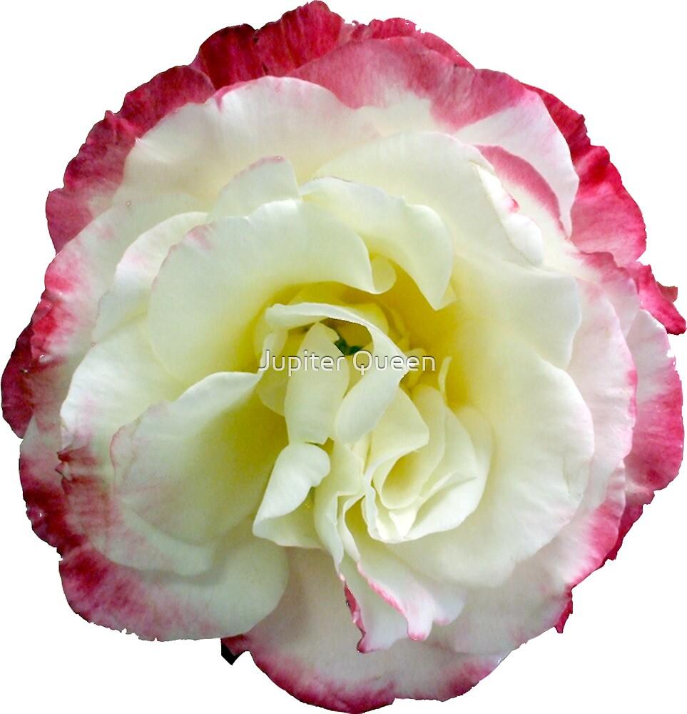 ROSE by Jupiter Queen