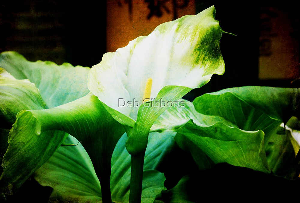 Lilly by Deb Gibbons