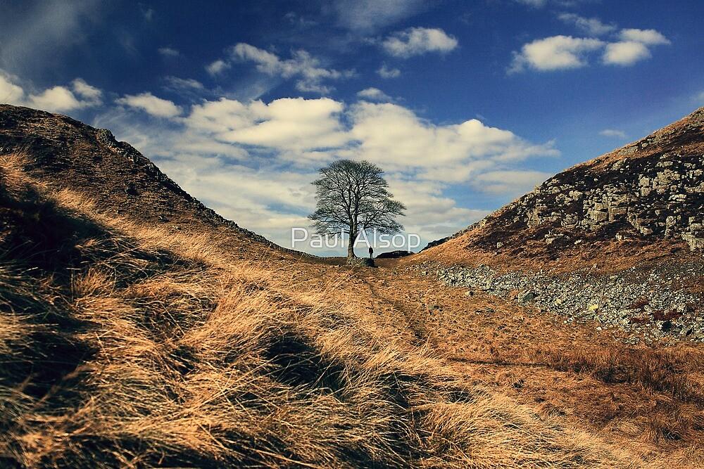Sycamore Gap by Paul Alsop