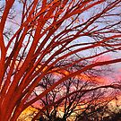 Amber Sunset Tree by ArtCooler
