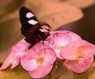 Butterfly Landing on Flower - Key West Florida by Debbie Pinard