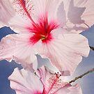 Pink Hibiscus by Alex  Bramwell