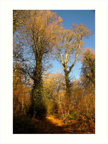 Harpford Woods Again by Mike  Waldron