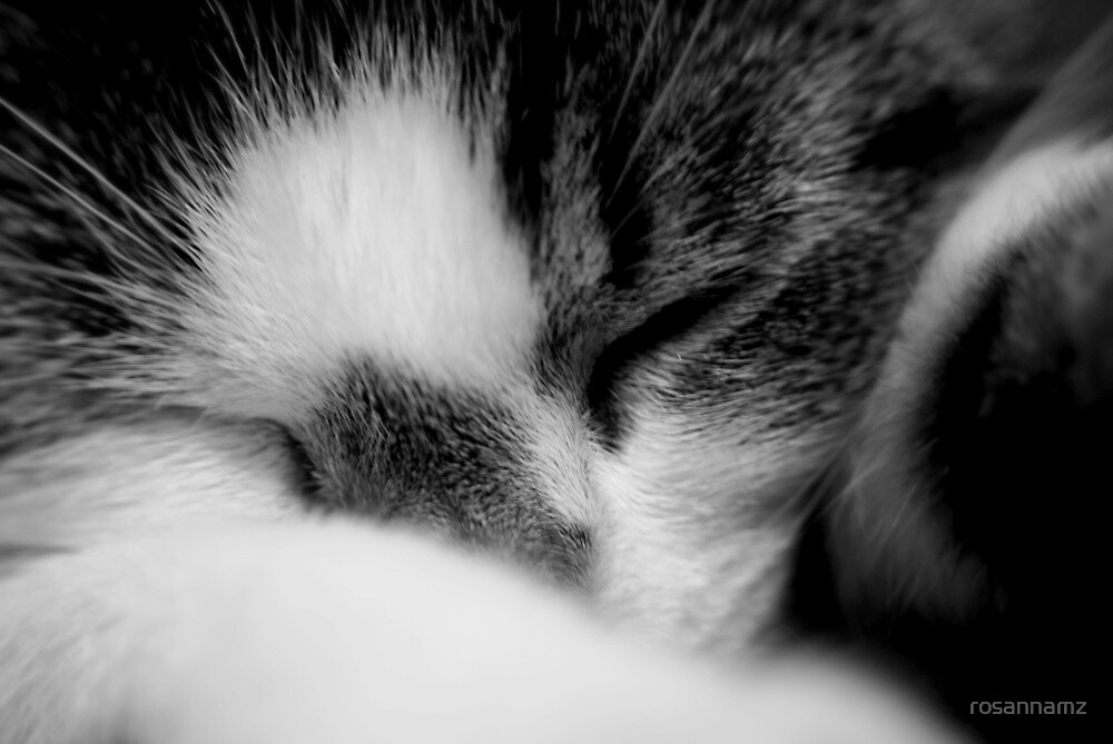 cats;family pet sploge.. by rosannamz