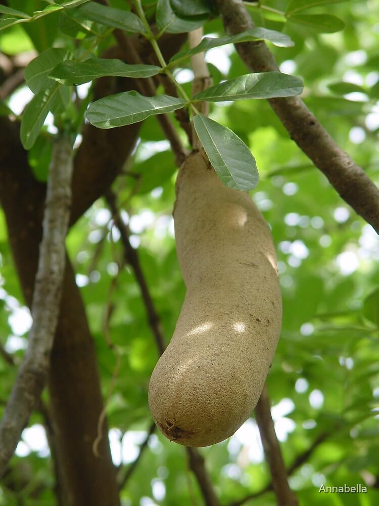 Seedpod on a Sausage Tree by Annabella