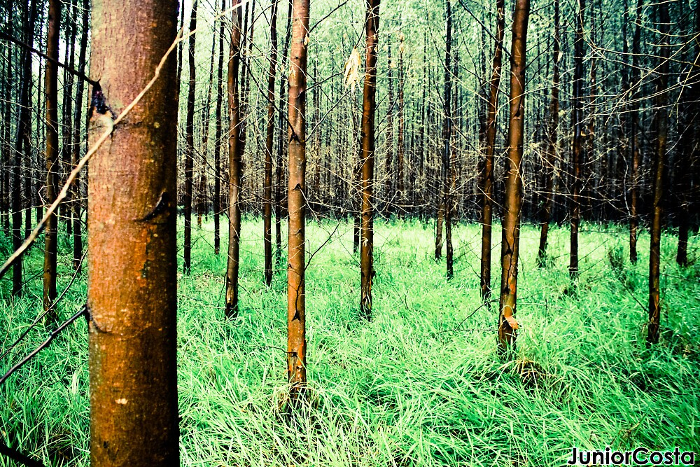 Just a Forest  !!!  by JuniorCosta