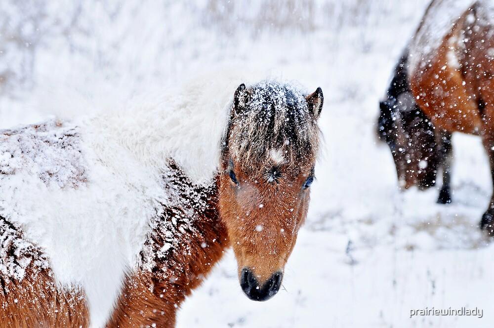 Flicka in the snow by prairiewindlady
