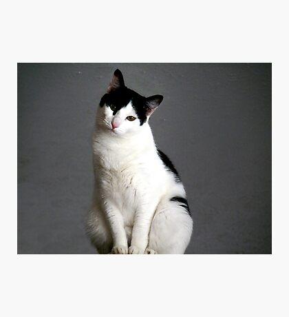 "Clifford... The ""Misunderstood"" cat Photographic Print"